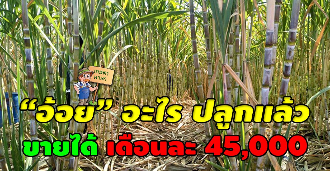 เกษตร นานา Kaset NaNa สาวโคราช เลิกทำนา หันมาปลูกอ้อยรายได้งาม