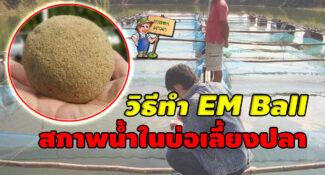 วิธีปรับสภาพน้ำในบ่อเลี้ยงปลา ด้วย EM Ball อีเอ็ม บอล