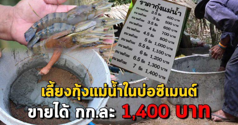 """เผยแนวทางการ """"เลี้ยงกุ้งแม่น้ำในบ่อปูน"""" ให้ขายได้สูงถึง 1,400 บาท/กิโลกรัม"""