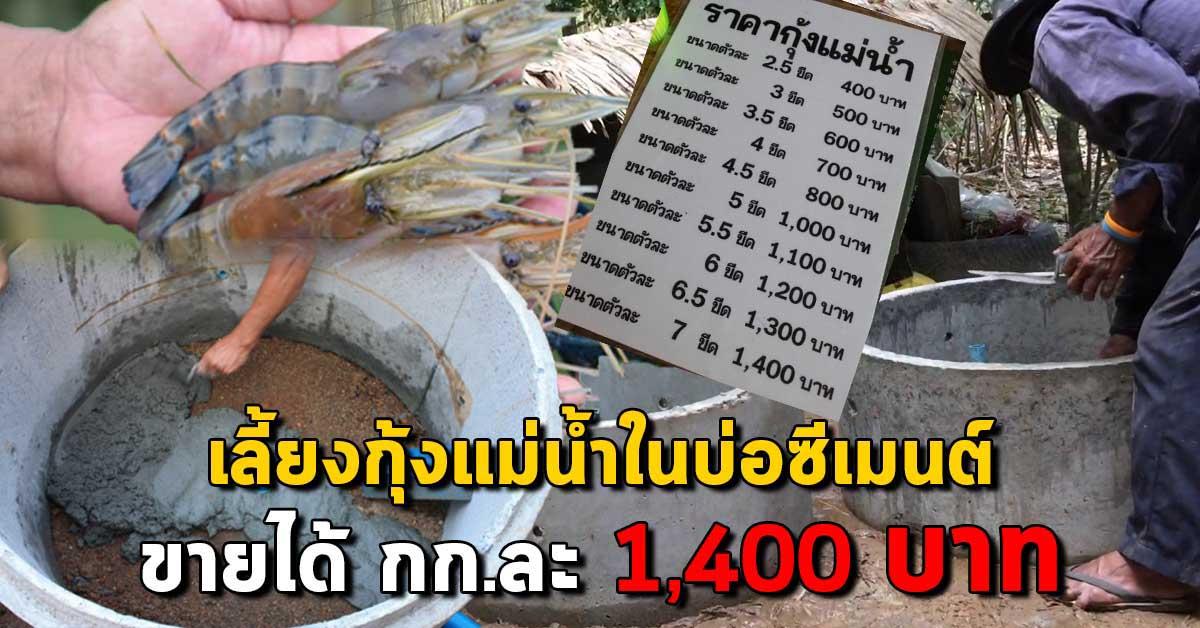 """เกษตร นานา Kaset NaNa เผยแนวทางการ """"เลี้ยงกุ้งแม่น้ำในบ่อปูน"""" ให้ขายได้สูงถึง 1,400 บาท กิโลกรัม"""