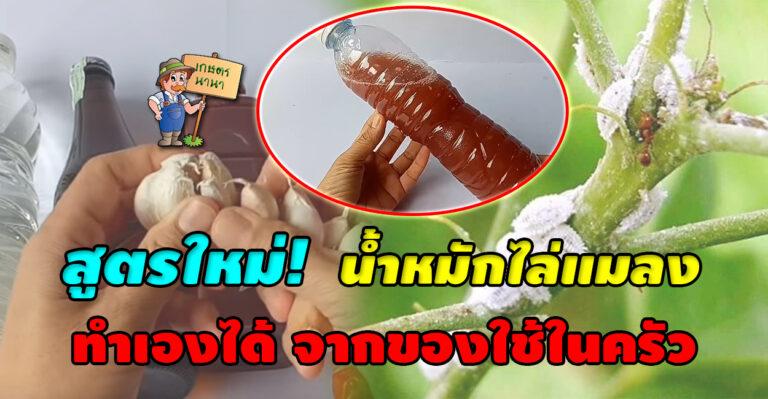 ใหม่! แจกสูตร น้ำหมักไล่แมลง ทำเองได้ จากของใช้ในครัว
