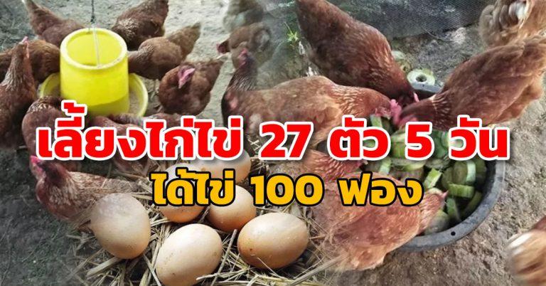เลี้ยงไก่ไข่ 27 วันแบบขำ ๆ กลับทำกำไรทุกวัน แบ่งปันวิธีพร้อมสูตรอาหาร
