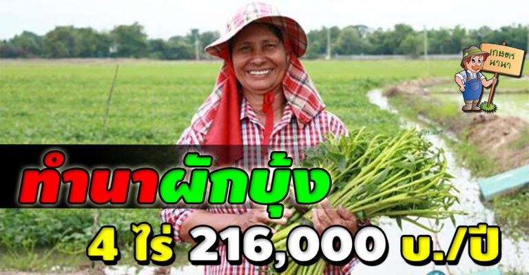 วิธีทำนาผักบุ้ง ปลูกง่าย รายได้ดี เก็บขายได้ทั้งปี