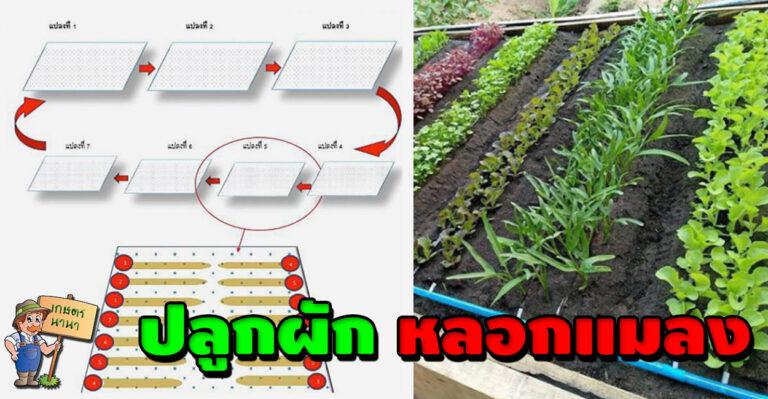 ไอเดียปลูกพืชแบบใหม่ แปลกแต่ได้ผล