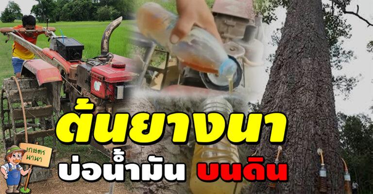 ต้นยางนา บ่อน้ำมันบนดิน ใช้แทนดีเซล เติมรถไถนาได้