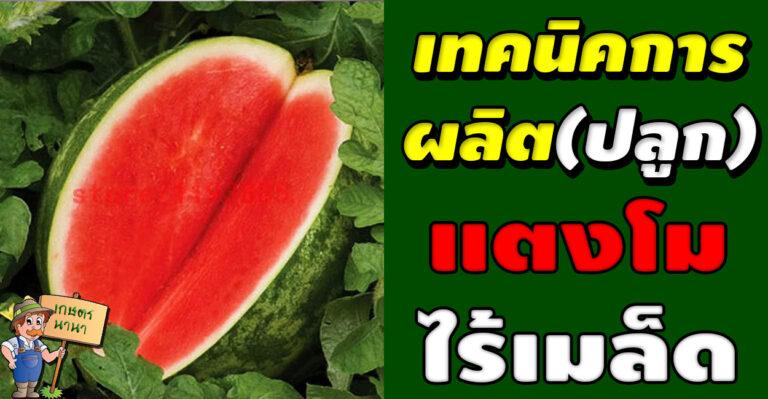 เทคนิคการผลิต(ปลูก)แตงโมไร้เมล็ด โดย รศ.นิพนธ์ ไชยมงคล