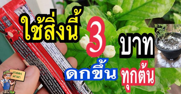 (คลิป) เพียงแค่ 3 บาท ช้อนเดียวไม่หมัก พืชผักติดดอกแตกใบแตกยอดเขียวโตเร็ว ต้านโรคแมลงติดผลดกชัวร์ 100%