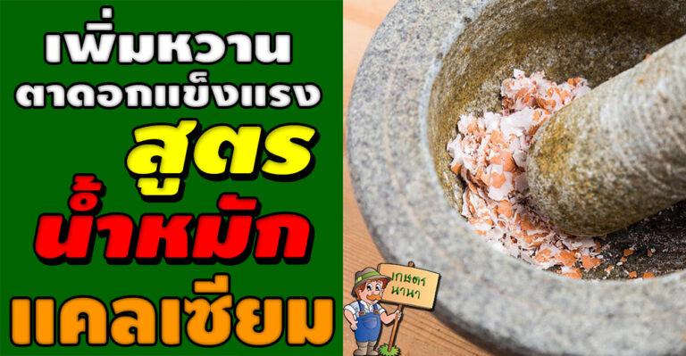 """วิธีการทำน้ำหมักแคลเซียม จากเปลือกไข่ """"เพิ่มความหวาน ช่วยให้ตาและดอกแข็งแรง"""""""