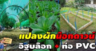 """ไอเดียการทำแปลงผักแบบคนเมือง ด้วยอิฐบล็อค กับท่อ PVC """"ทำบนดาดฟ้าได้"""""""