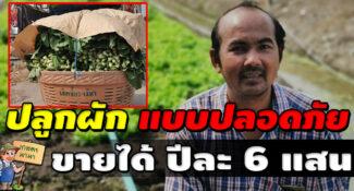 """ปลูกผักแบบปลอดภัย ขายได้ปีละ 6 แสน ต่อยอดความสำเร็จ """"เกษตรเชิงพื้นที่"""""""