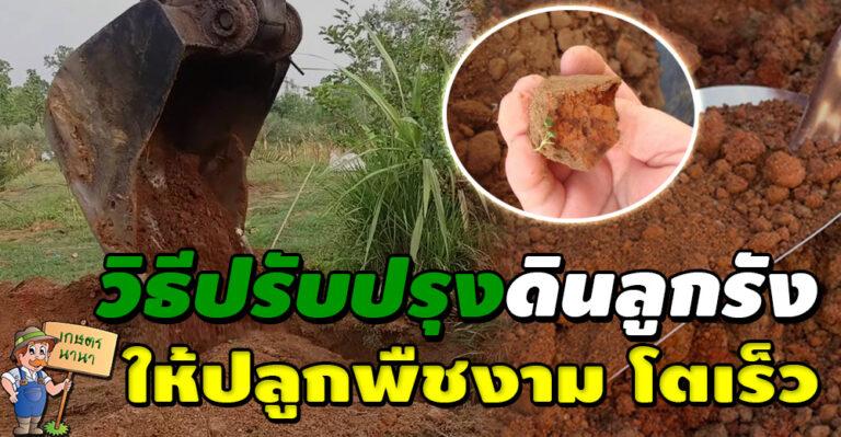 วิธีปรับปรุงดินลูกรัง ให้ปลูกพืชงาม โตเร็ว