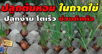 ปลูกต้นหอมในถาดไข่ ปลูกง่าย โตเร็ว เก็บกินได้นาน ช่วงกักตัว