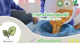 การผลิตจุลินทรีย์ 3 ประเภท 7 ชนิด จากแม่โจ้ (มีคลิป)