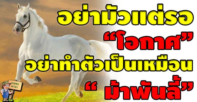 """อย่าทำตัวเป็นเหมือน """" ม้าพันลี้"""" อย่าอวดดีคิดว่าตนเองเก่ง หรือ อยู่เหนือผู้อื่น"""