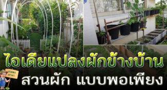 """ไอเดีย """"แปลงผักข้างบ้าน"""" เปลี่ยนข้างกำแพงบ้านให้เป็นสวนกินได้"""
