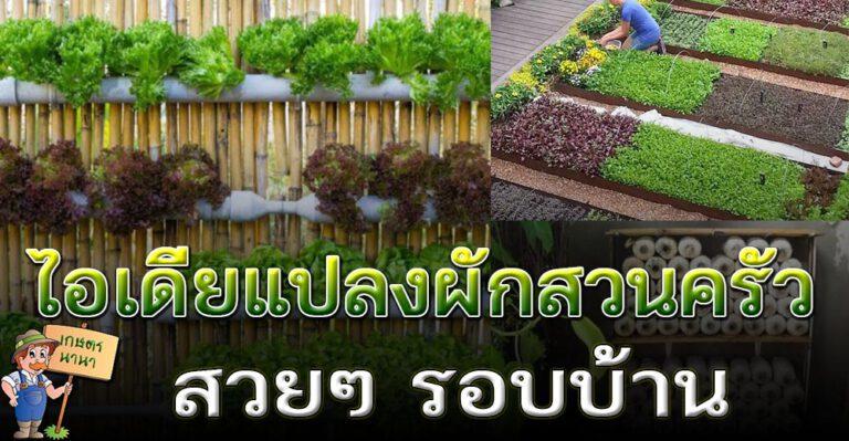 ไอเดียทำแปลงผัก ปลูกผักสวนครัว ไว้รับประทาน อยู่แบบพอเพียง