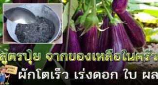 สูตรปุ๋ยแห้ง บำรุงพืชให้งาม เร่งดอก เร่งผล จากของเหลือในครัว