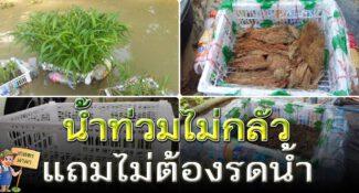 น้ำท่วมไม่กลัว ปลูกผักบุ้งลอยน้ำ แถมไม่ต้องรดน้ำ แค่ใช้ขวดพลาสติก กับลังผลไม้