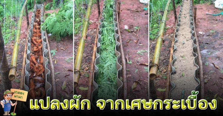 ไอเดีย ทำแปลงปลูกผัก จากกระเบื้องเก่า ใช้พื้นที่น้อย ประหยัดงบ